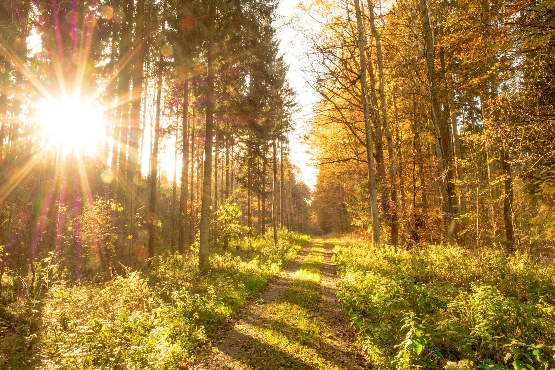 mindfull wandelcoaching ontspan in het nu